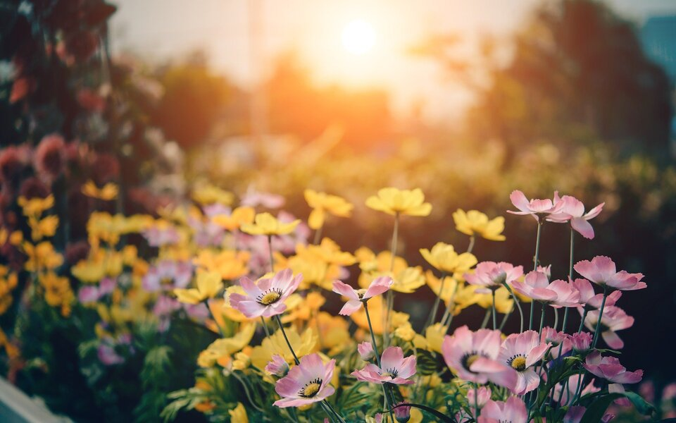 Five Ways Shade Can Improve Your Garden